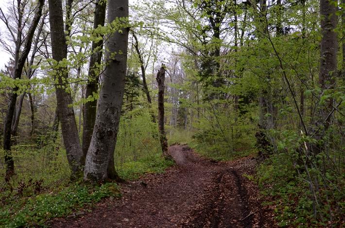 Bosque en los alrededores de Andechs