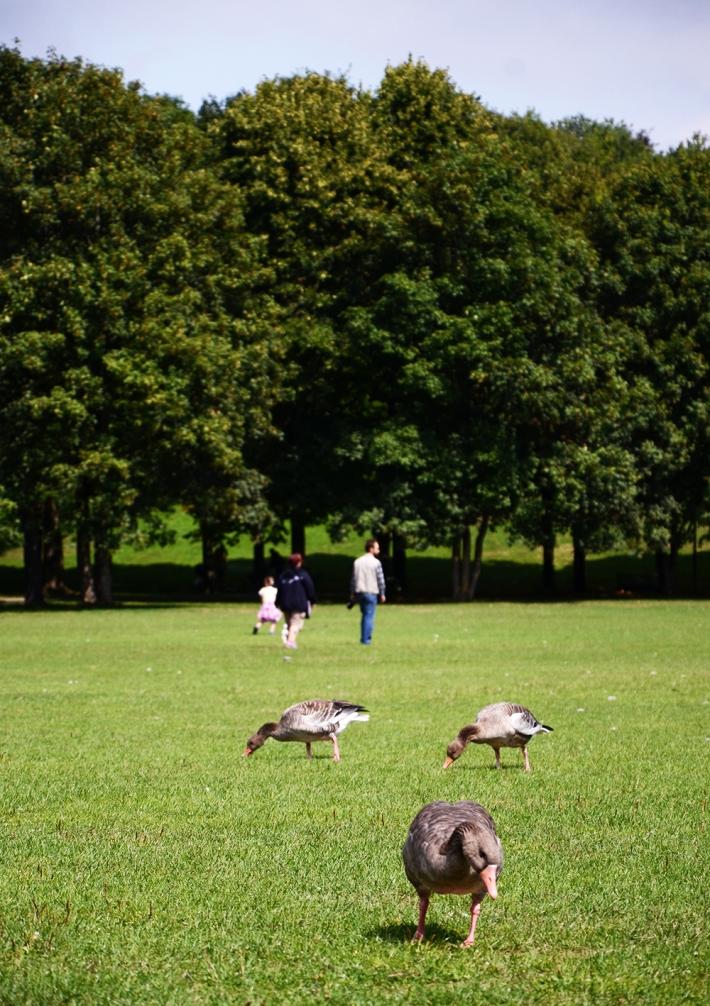 Animales en el parque
