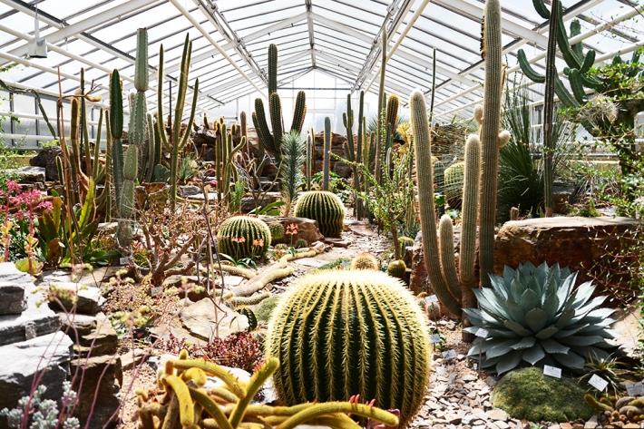 Invernadero de cactus